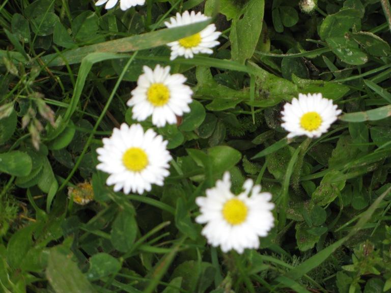 Wild Flowers 013